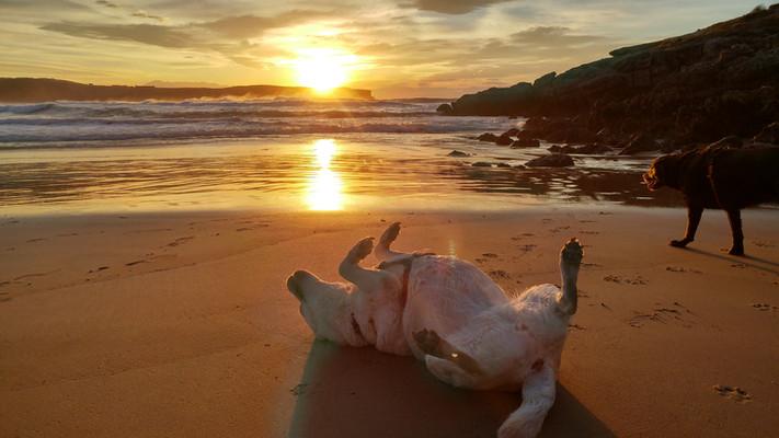 Rumba playa atarceder Mr Hueso.jpg