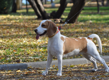 6 reasons your dog should try a harness today