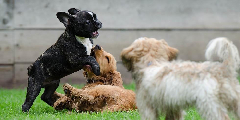 The Secret Language of Dogs (1)