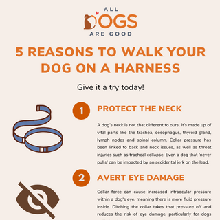 5 reasons to walk your dog on a harness