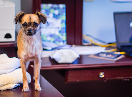 5 ways to create an amazing dog friendly office