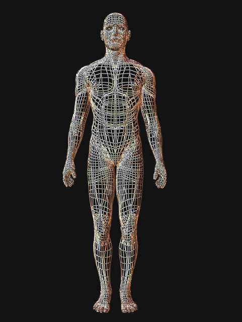 筋膜は全身に張り巡らされています