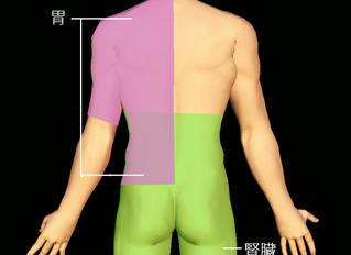 腰痛と内臓の関係