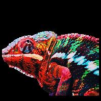 Diseño_sin_título-removebg-preview.png