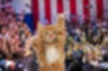Help Animals Win, donate to Animap PAC