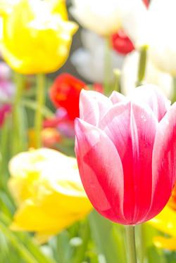 花をボケを利用して撮影|福岡のカメラマン