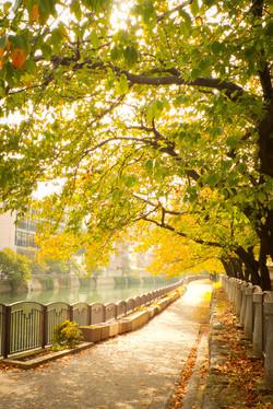 色補正後の公園の写真|福岡のカメラマン