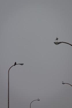 望遠レンズで撮影した写真|福岡のカメラマン
