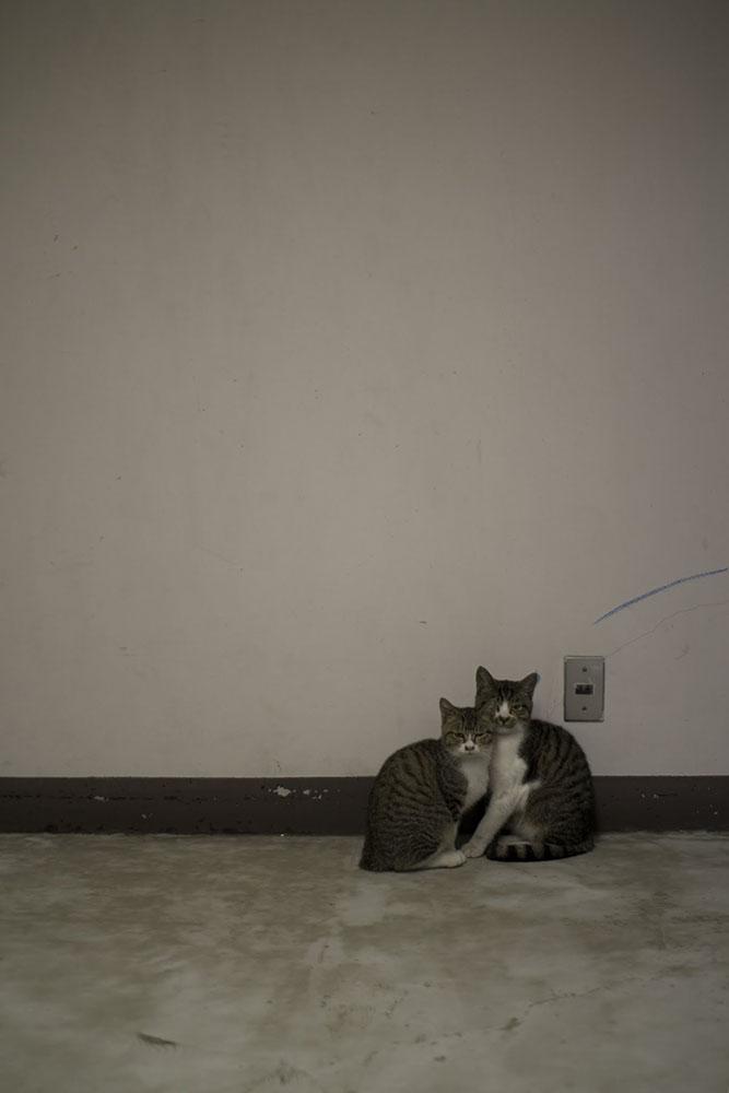 写真集制作の為のねこのスナップ写真|福岡のカメラマン
