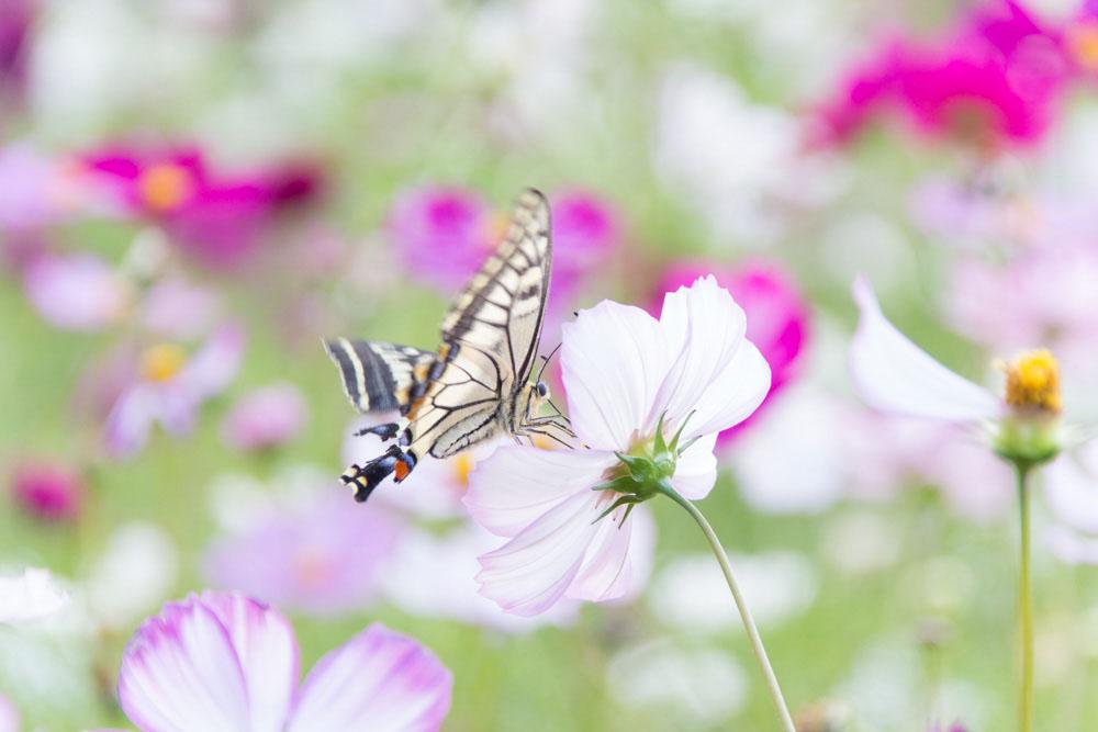 高速シャッター撮影の蝶|福岡のカメラマン