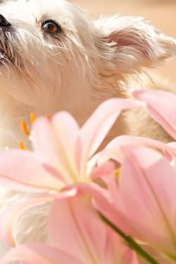 犬を撮影してレタッチ加工|福岡のカメラマン