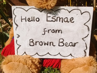Friday: Brown Bear says 'Hello' to...