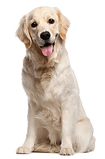 dog_PNG50321.png