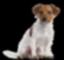 dog_PNG50249.png