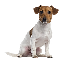 dog_PNG50249.png