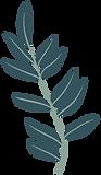 plante-bleue.png