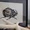 Thumbnail: Orytes Nasicornis  -  grafika