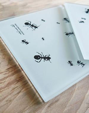 Mrówki - komplet 2 szklanych podkładek