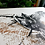 Thumbnail: Lepidoptera - reprodukcja na płótnie