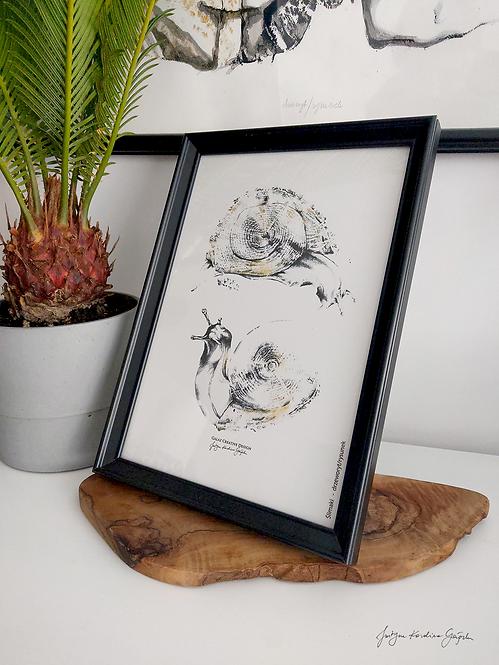 Ślimaki - reprodukcja na płótnie