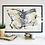 Thumbnail: Lepidoptera II - grafika