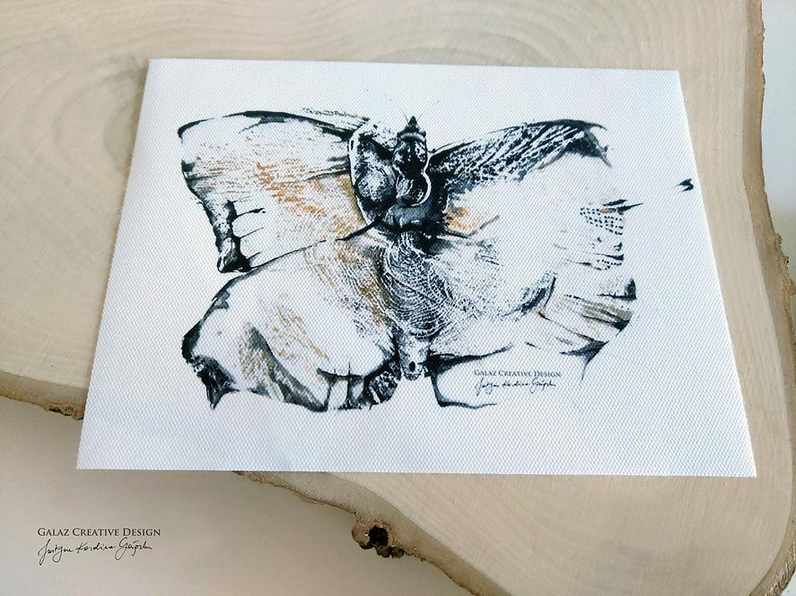Lepidoptera - reprodukcja