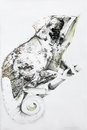 Chameleon - Kameleon - woodcut -drwaning
