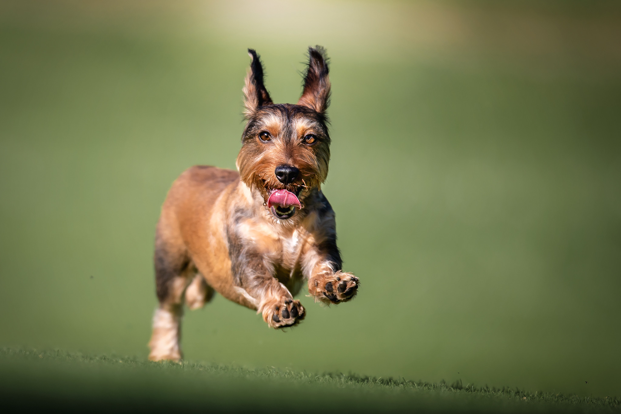 Servizio fotografico per il tuo cane