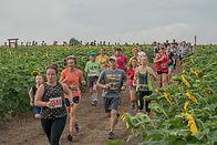 Kansas Maze Sunflower Trail Run