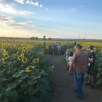 Guest at sunflower festival