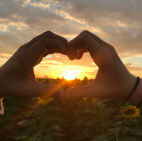 Heart in sunflowers