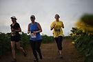 Sunflower Trail Run