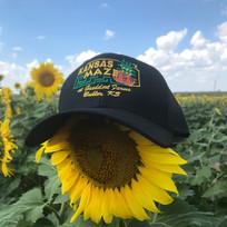 Kansas maze cap on sunflowers