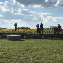 Viewing platform for sunflowers
