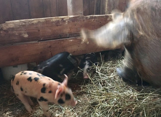 First babies on the farm!