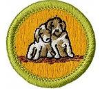 Dog Care.jpg