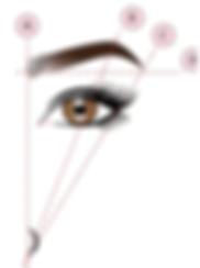 Eye Brow Golden Ratio