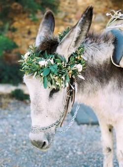 olive-grove-wedding-032-517x700