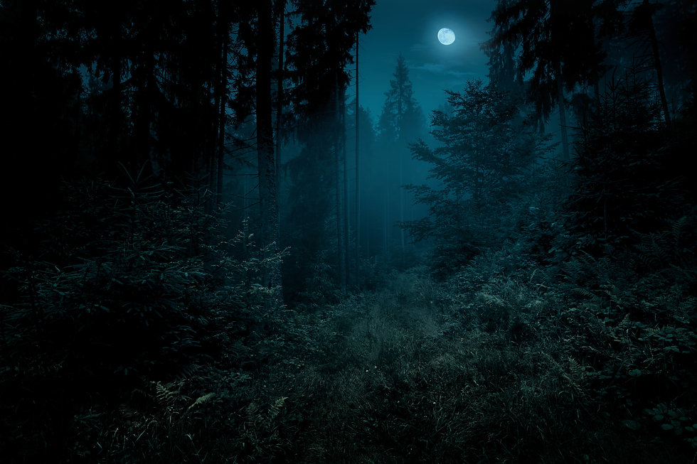 Full moon over the spruce trees of magic