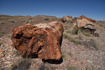 Petrified Forest, Arizona.