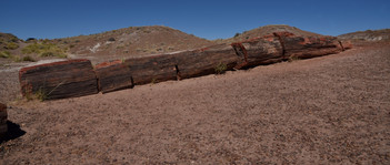 Petrified Forest, Arizona.