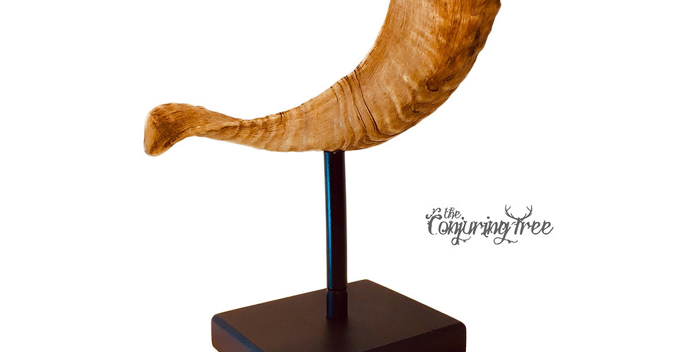 Ram Horn sculpture trophy mounted on wood