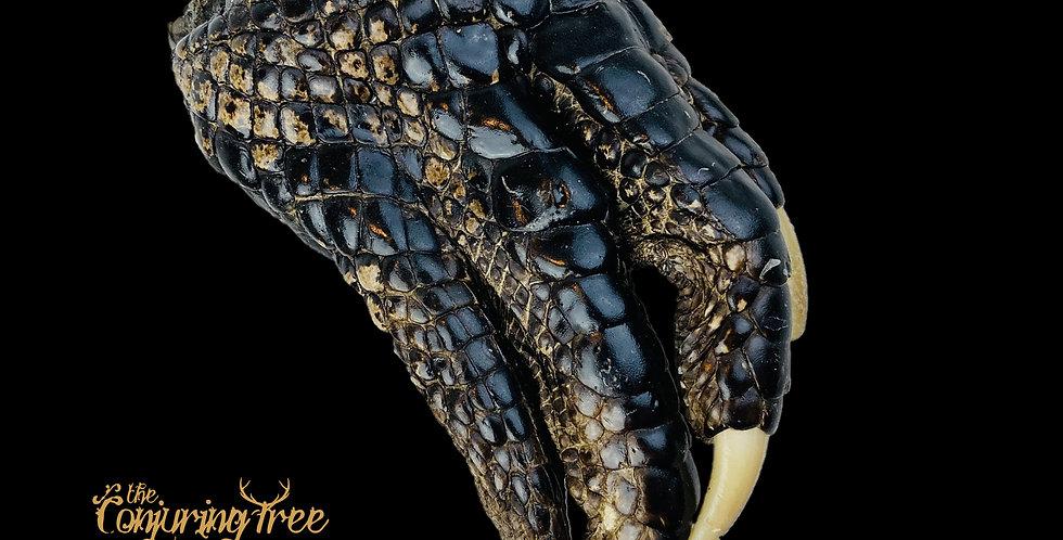 Alligator claw (large)