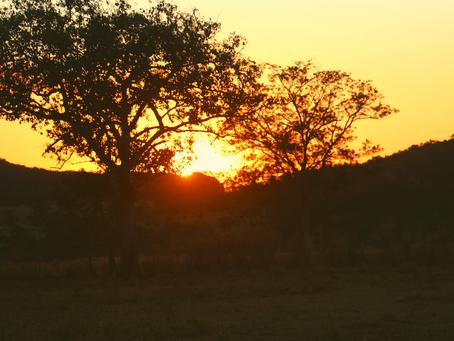 Saiba mais sobre Juscimeira: cidade onde a GALU AGROPECUÁRIA está localizada