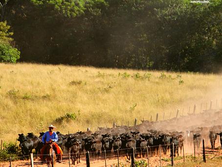#DiadosPais: Relacionamento familiar fortalece agronegócio