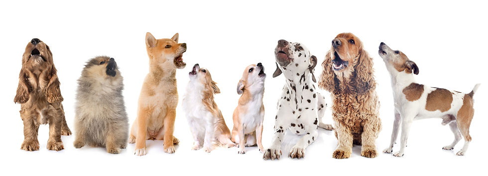 Barking Dogs.jpg