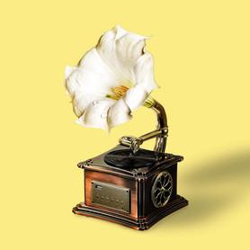 gramophone jaune.jpg
