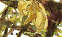 HELEN JONES . 'Mourning Flower'