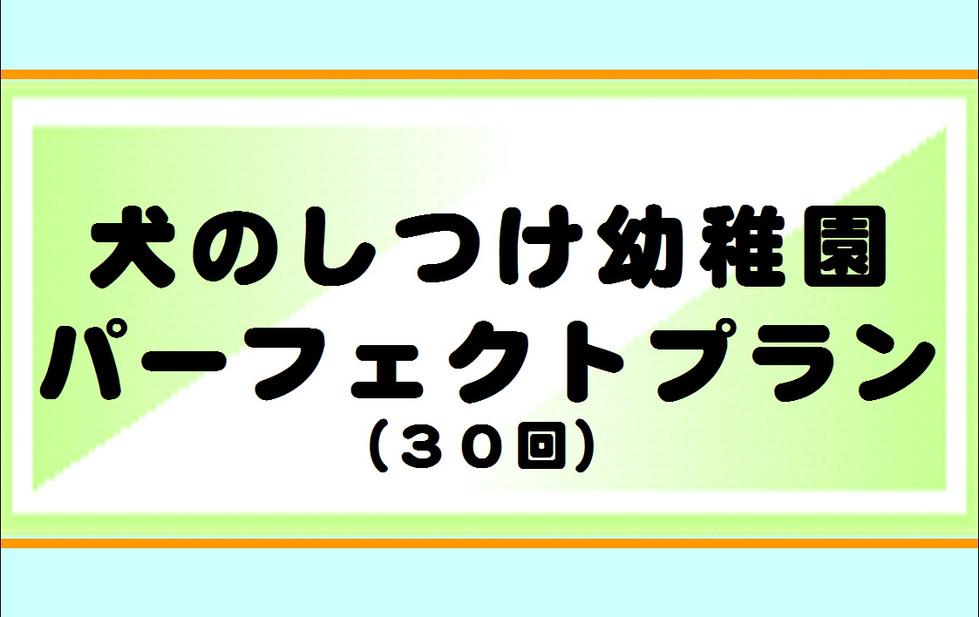 しつけ幼稚園パーフェクトプラン.JPG
