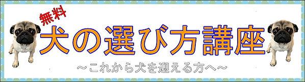 犬の選び方講座バナー.JPG